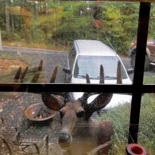 You never know what you will wake up to when in the Blue Ridge Mountians selling soy candles.